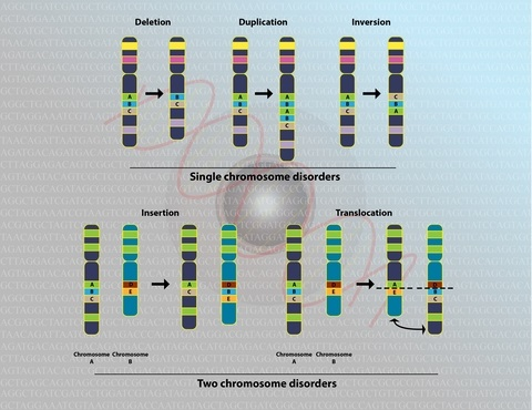 DNA Chromosomal copy errors