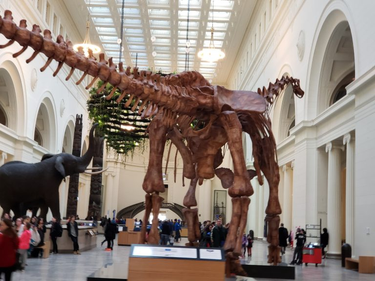 Maximo the Titanosaur at the Chicago Field Museum