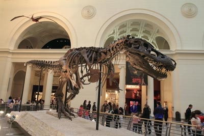 Sue, a Tyrannosaurus Rex on display at the Chicago Field Museum